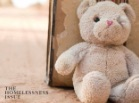 Thumbnail: close-up of a white teddy bear.