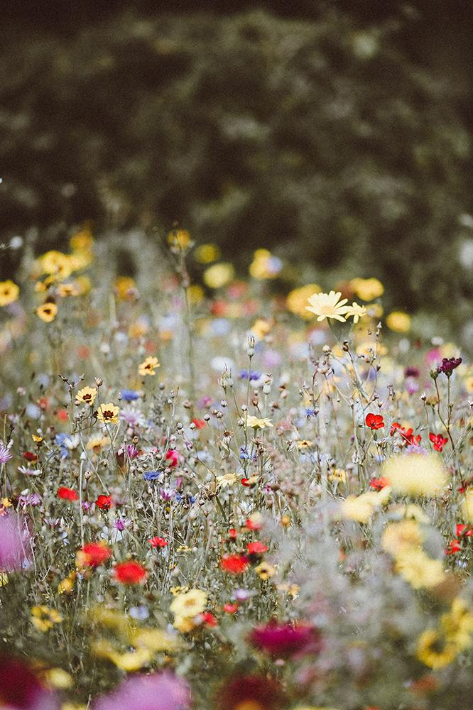 Meadow flowers.