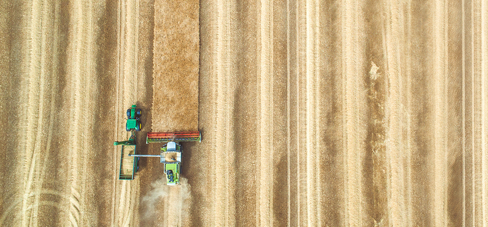 Harvester in a grain field.